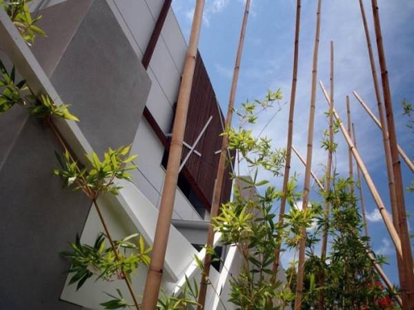 bambukai vidaus kieme namas australijoje