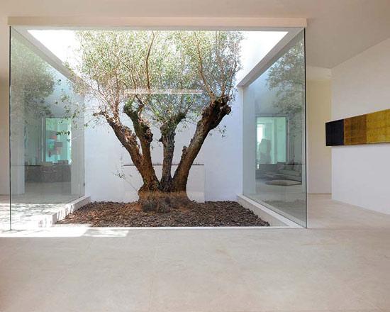 namo vidaus kiemas, stiklo sienos, medis