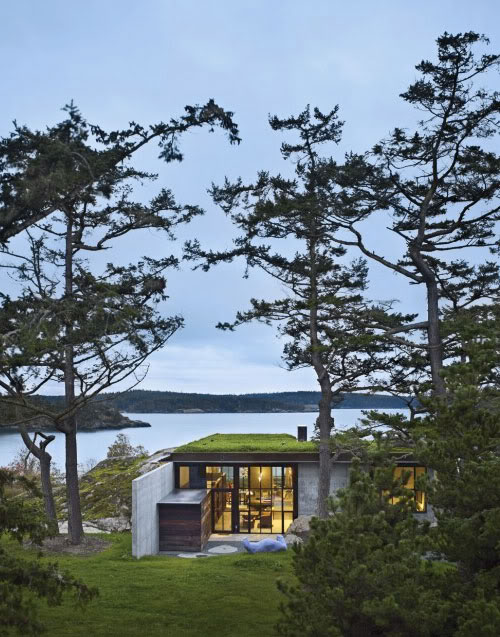 žolė ant namo stogo
