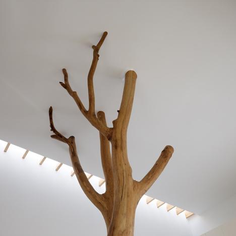 medžio šakos laiko lubas