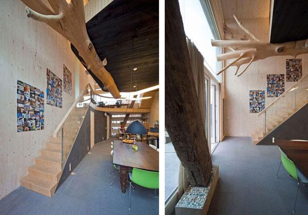 medis su sakomis namo erdveje,  trys nuotraukos ant sienos