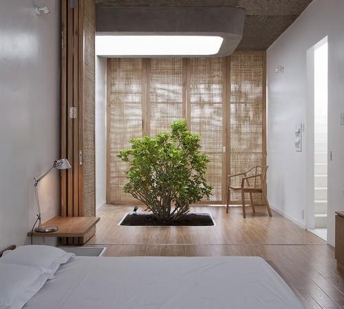 miegamasis, augalas, naturalus apsvietimas