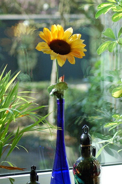 sunflower-945804_640